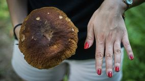 Big mushroom compared to hand stock images