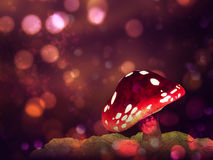 Magic mushroom Stock Image