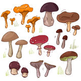 Big mushrooms set Stock Images