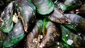 Big mussels seafood menu Stock Image
