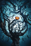 Big mystic tree with halloween pumpkin and skeletons. At night in moon light Stock Photo