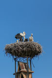 A big nest of Stork birds on top of the roof in Austria Stock Photo