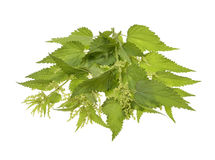 Big nettle herb plant Stock Images