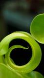 Big New Green Fern Royalty Free Stock Photos