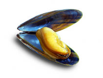 The big New Zealand mussel Stock Photos