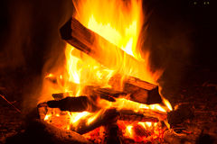 The big night bonfire in the woods Royalty Free Stock Photo