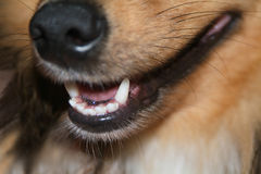 Big nose. Nose of dog Royalty Free Stock Image