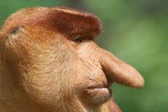 Big nose. Stock Photos