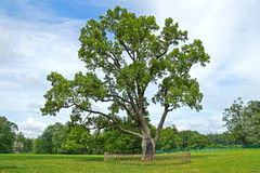 Big oak on a glade Royalty Free Stock Photo