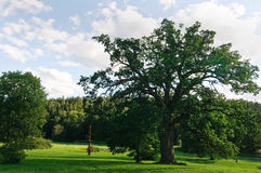 Big oak in the park Royalty Free Stock Image