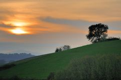 Big Oak at sunset. A big oak on the edge of an hillside at sunset Royalty Free Stock Image