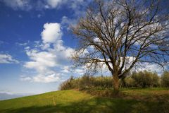 Big oak tree and blue sky Stock Photography