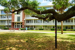 A big oak tree in front of University of Florida building Stock Photos