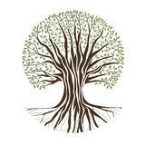 Big Oak Tree Royalty Free Stock Photo