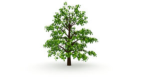 Big oak tree Stock Photo