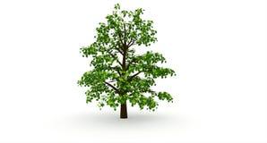 Big oak tree Stock Photo