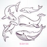 Big ocean creatures Royalty Free Stock Photos