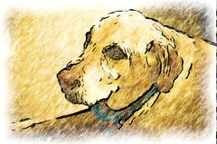 Big Ol' Puppy. Very old yellow lab with blue bandanna stock illustration