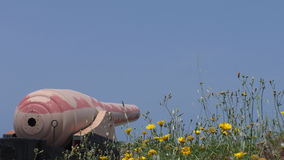 Big old cannon and flowers stock video footage