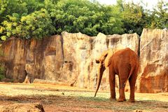 The big old elephant at the zoo. Stock Images