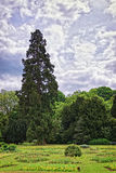 Big old fir trees and flowers in Park of Audley Stock Image