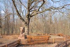 Big old oak tree Royalty Free Stock Photos