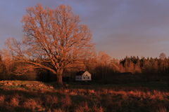 Big old oak tree and a house, nature, forest, travel, landscape, Sweden Royalty Free Stock Images