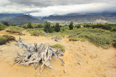 Big old stump on sand in chilean mountains Stock Photography