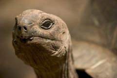 Big old tortoise Stock Photos