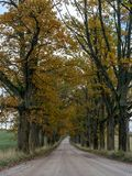 Picture of a big and old tree alley. Big and old tree alley with road, autumn colors, Latvia royalty free stock photo