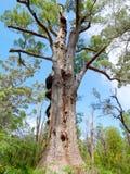 Big old tree Royalty Free Stock Image