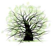 Big old tree, green leaf Royalty Free Stock Photo