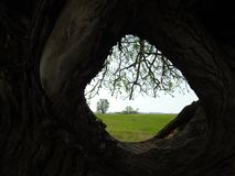 View over old tree hole in spring, Lithuania Royalty Free Stock Image