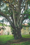 Big old tree and house Royalty Free Stock Photography