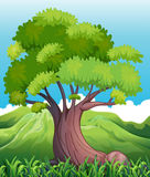 A big old tree Stock Images