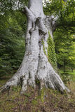 Big old tree with inscribed letters on it Stock Photos