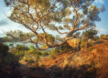Big old tree in mountains at sunrise. Beautiful panoramic landscape Stock Photography