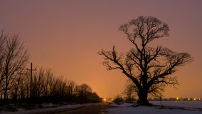 Big old tree near road with orange sky in bacground.  Stock Image