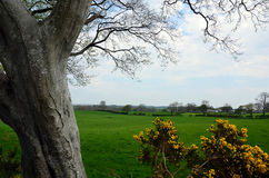 Big old tree and pasture nature landscape photography Stock Photos
