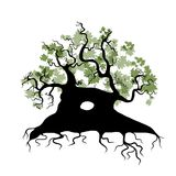 Big old tree with roots for your design Stock Photography