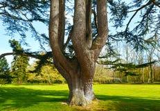 Big old tree in spring park. Stock Photo