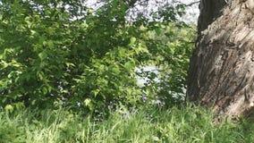 Sunny tree and foliage stock video