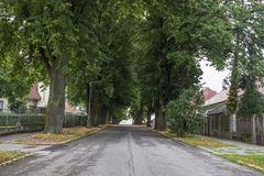 Big old trees on the residential street. stock images