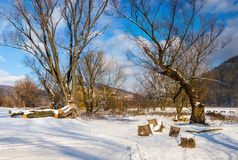 Big old trees in winter forest Stock Photos