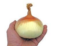 Big onion Royalty Free Stock Photography