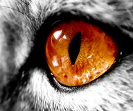 Big Orange Cat`s Eye, Zoom Royalty Free Stock Image
