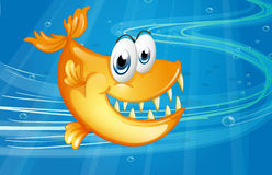 A big orange fish Royalty Free Stock Image