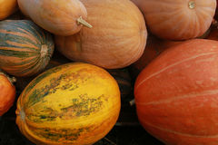 The big orange pumpkin. Dietary vegetarian food. Magazine Cover, Royalty Free Stock Images