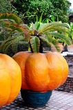 The big orange pumpkin Royalty Free Stock Images