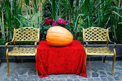 The big orange pumpkin Stock Image
